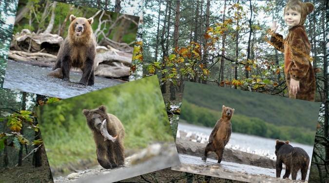 История про медвежонка Фото медведей