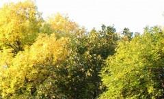 праздник осени фото осеннего пейзажа