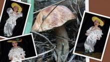 фото коллаж для костюма гриба боровика