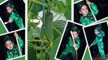 фото коллаж к авторскому костюму огурца для мальчика