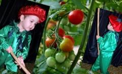Костюм Помидора и другие авторские костюмы на праздник Осени от дизайнера Людмилы Гришко на Прокат в Киеве (044) 565=89-83