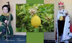 яблоки бессмертия фото коллаж на фоне лимона
