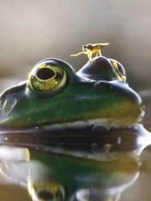 фото лягушки с мухой на голове
