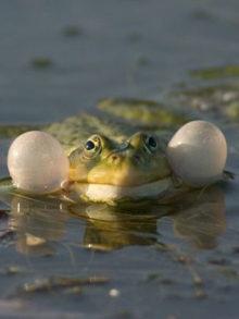 фото лягушки в природе